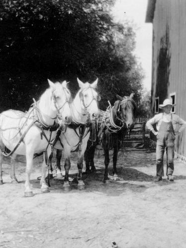 Paul Klein with work horses - circa 1920's