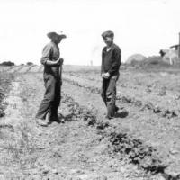 L.G. and Blanch (Sampson) Lawson's 10 acre  berry farm - circa unknown